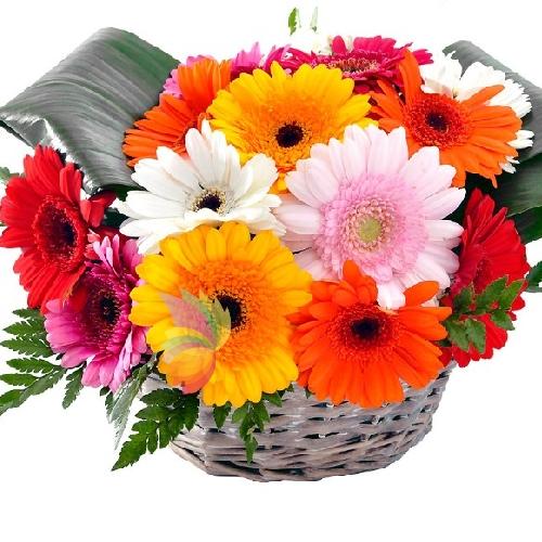 Top Gerbere in cesto | Spediamo fiori, dolci e regali a domicilio RV74