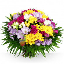 immagine Bouquet di fresie colorate